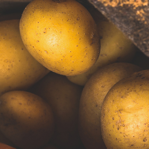Wir liefern Kartoffeln zu Ihnen vom Großmarkt in Düsseldorf